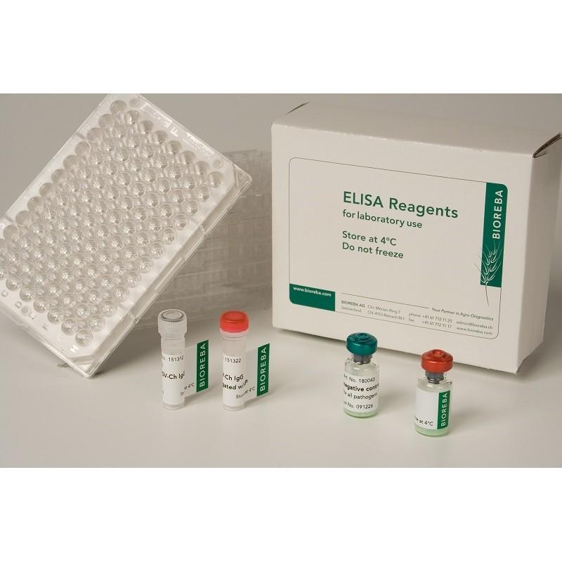 Apple chlorotic leaf spot virus ACLSV Reagent set 480 assays