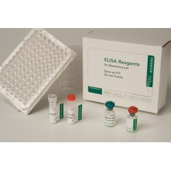 Pelargonium leaf curl virus PLCV Reagent set 960 assays pack 1