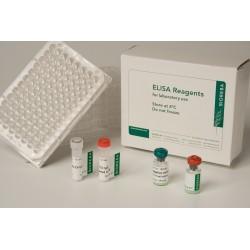 Pelargonium leaf curl virus PLCV zestaw odczynników 480 testów