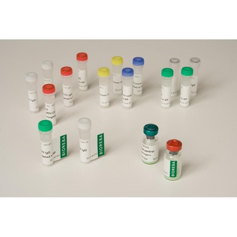 Pelargonium line pattern virus PLPV Positive control 12 assays